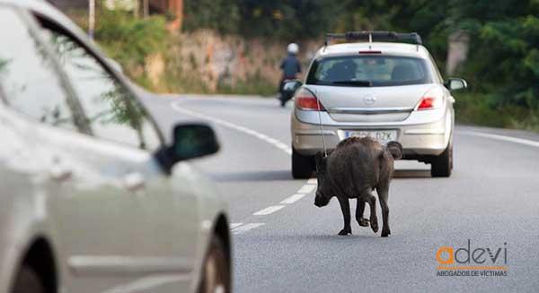 accidentes por animales en carretera